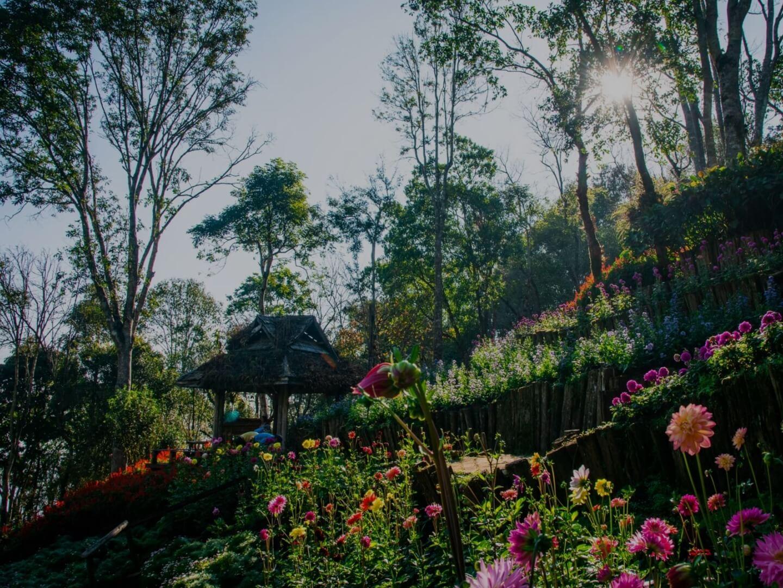 สวนรุกขชาติแม่ฟ้าหลวง (ดอยช้างมูบ)
